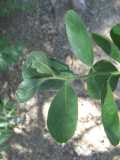 Unknown plant 4